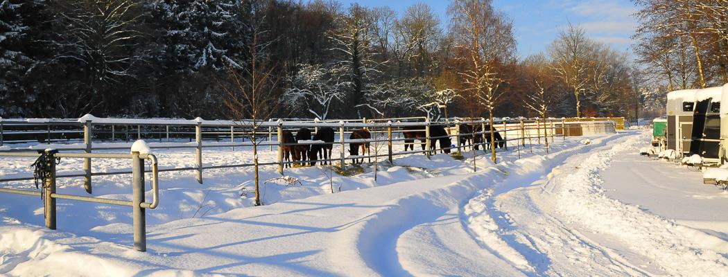 Pferdepension_Winter.JPG